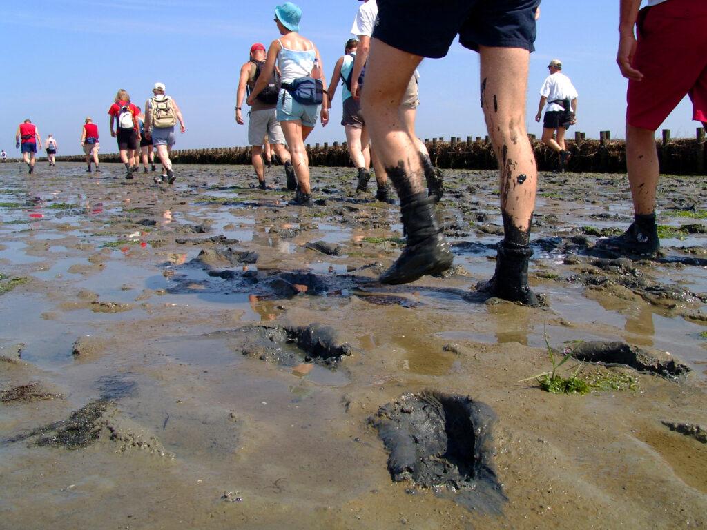 wadloopschoen benen wandelen wad modder