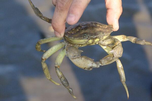 wadlopen-pieterburen-educatief-krabbetje-groot